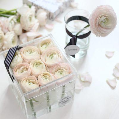 ranunculus, box, flower, boglárka, púder, akril, akrildoboz, átlátszó, doboz, virág,